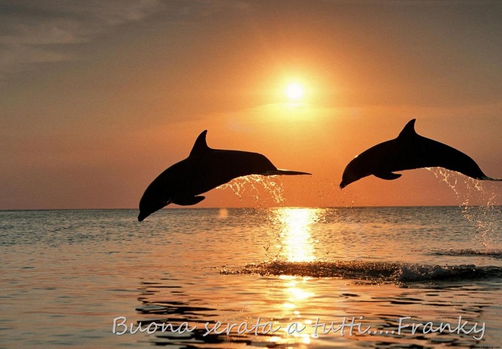 delfini-al-tramonto-888360