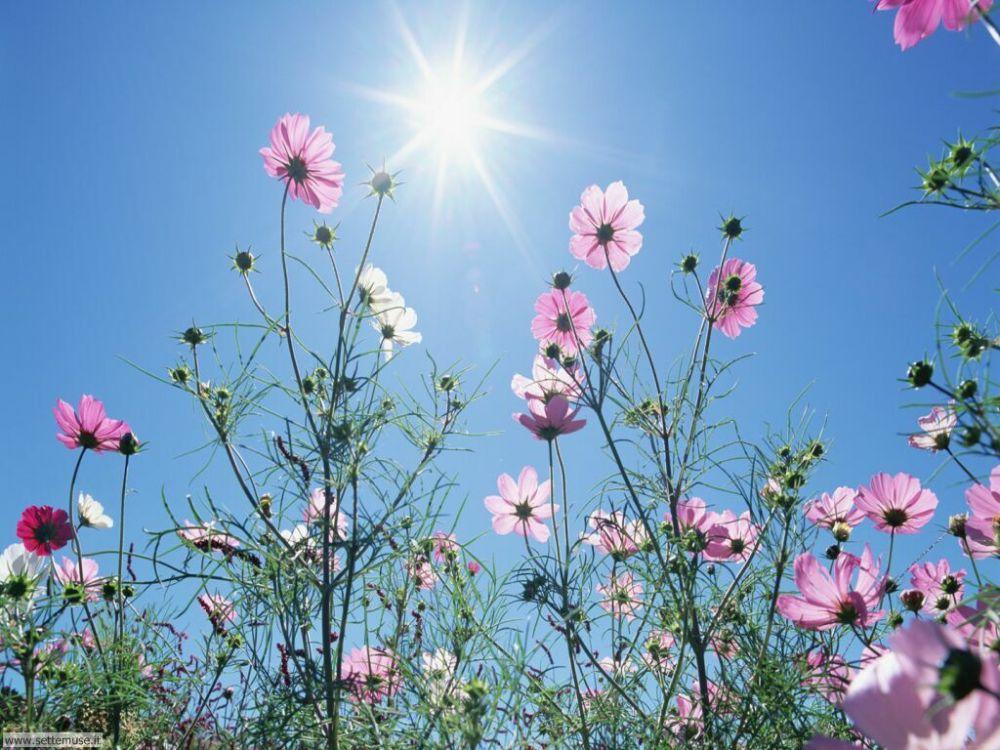 fiori_di_prato_004 (2)